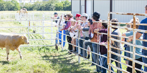 Livestock Management & Merchandising  students learning outdoors during class near Wichita at Butler Community College